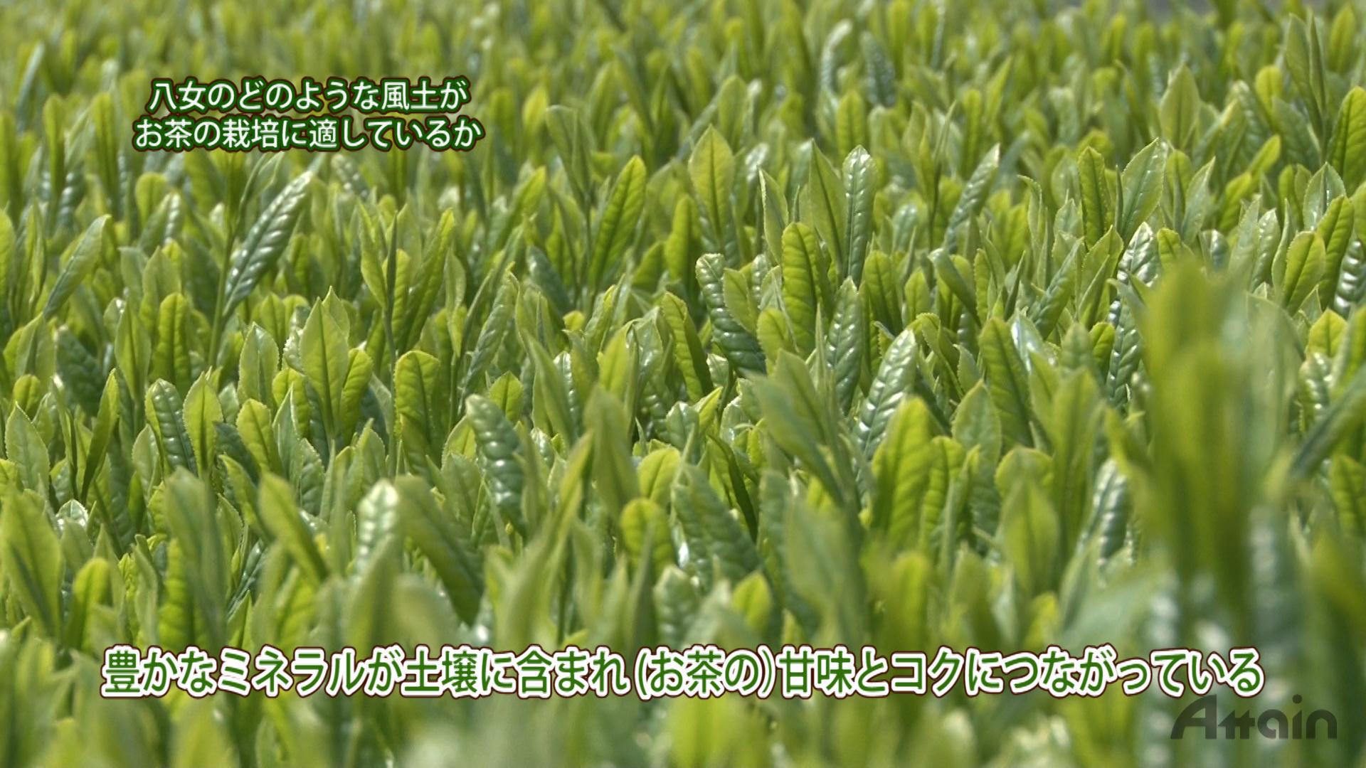 『煎茶の製造工程』をYouTube【日本通TV】チャネルに公開