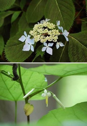 【星野リゾート奥入瀬渓流ホテル】「渓流で咲き誇る花々。」
