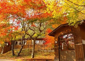 【星野リゾート奥入瀬渓流ホテル】 紅葉の奥入瀬