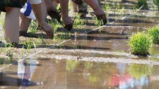 お子様は参加無料! 親子で泥んこになって、田植えを楽しむ! 酒米の田植え体験イベント開催  2016年6月4日(土) @山梨県富士川町