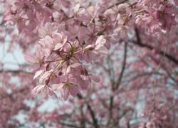 春~初夏は自然派で行こう!!花・野菜収穫体験など、自然を楽しむネイチャーツアー満載 4月・5月・6月情報 ナクア ホテル&リゾーツ
