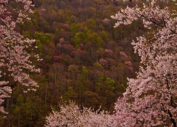 「待ちわびた春の訪れ」