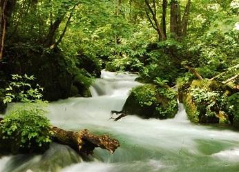 「奥入瀬渓流ホテル」新緑の楽しみ方