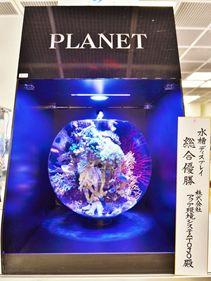 アクアリウム業界の先進を行くアクア環境システムTOJO 第31回日本観賞魚フェア2013 アクアリウムレイアウトコンテストにおいて、 史上初の4部門同時制覇!