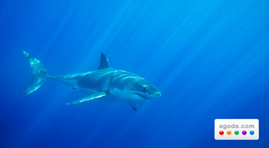 Agoda.comが豪州のホテルを大特価でご提供、地球の裏側でサメとダイビングするなら今!