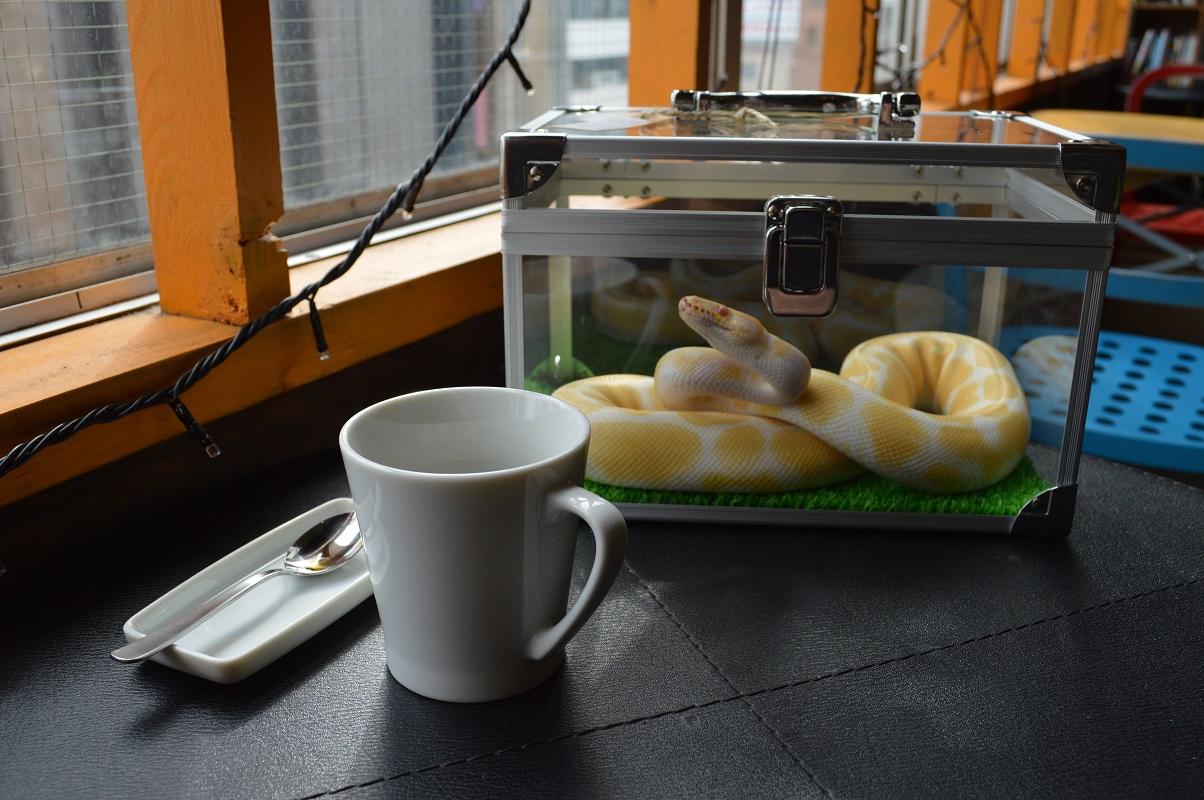 おしゃれの街、東京・原宿にヘビカフェ「東京スネークセンター」をオープン