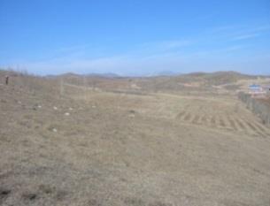 当社植樹により蘇った内モンゴル地区・林西県1