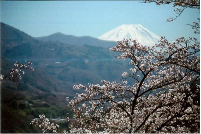 贅沢極まる花見酒、自分だけのサクラでお花見はいかが!? 山梨県富士川町の町おこし体験プロジェクト「まちいくふじかわ」 桜の名所100選、大法師公園にて桜の植樹プロジェクト開催決定