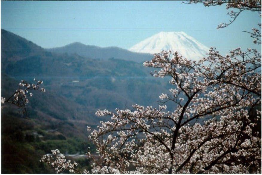 「さくら」 「富士山」 「日本酒」 コロナに負けるな!日本の文化で過疎の町に賑わいを。 「満開の桜オーナーになろう2021」プロジェクト開始